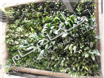 دیوار سبز داخلی گرین وال زنده سعادت آباد