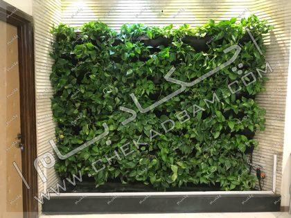 دیوار سبز داخلی گرین وال گل پتوس شرکت ایران کیش تهران بیهقی living green wall