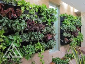دیوار سبز داخلی گل پتوس سانسوریا دراسنا کامپکت حسن یوسف سیسوس فیتونیا