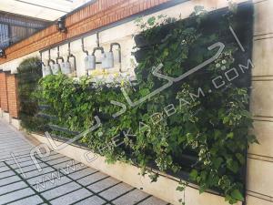 دیوار سبز green wall مدولار حیاط پوشش دیوار حیاط با انواع گیاه رونده و پوششی پاپیتال ابلق تهران قیطریه قلندری تهران