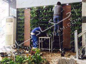 کاشت گل و گیاه در گلدان های دیواری برای ایجاد دیوار سبز زنده یکپارچه گیاهان مورد استفاده در دیوار شامل آگلونما پتوس و ...