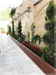 گل و گیاه حیاط فلاورباکس طولی کاج لاوسون ساناز