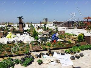 کاشت گیاهان روف گاردن بام سبز در آمل نمای کلی از پشت بام