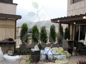 مراحل اجرا-کاشت گیاه-روف گاردن-بام سبز-کامرانیه-مدولار-پرتابل-پلنترباکس-چوب پلاست-ترموود-فضای سبز-پرگولا-آلاچیق-آتریوم