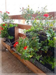 گلدان گل ساناز در بالکن فرمانیه تهران فلاورباکس چوبی ترمووود