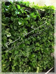 دیوار سبز داخلی گل پتوس شرکت ایران کیش تهران