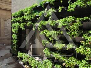 پوشش تاسیسات برق با دیوار سبز گرین وال مدولار تهران فرمانیه چوب پلاست گل ناز فرانسوی