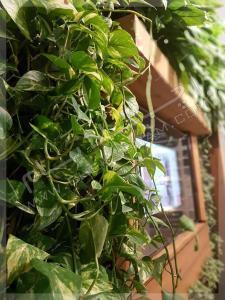 دیوار سبز داخلی گرین وال محمودیه تهران