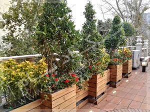 فلاورباکس چوبی ترموود و درختچه های مورد کامیس پاریس یاس هلندی شمشاد طلایی روی پشت بام سبز
