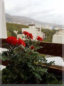 گلدان گل ساناز در بالکن فرمانیه تهران